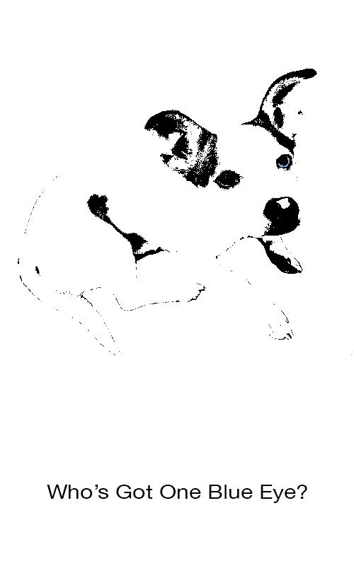 Who's Got One Blue Eye? illustration of dog with one blue eye